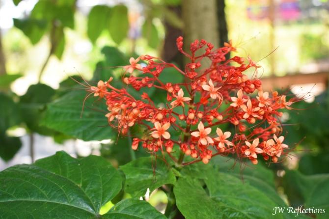 img_3708-edited-flower